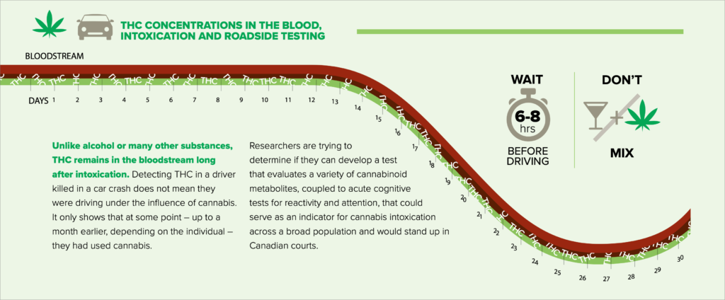 A graph demonstrating cannabis concentration in the blood over time. THC concentration drops after 13 days, but small amounts remain in the bloodstream
